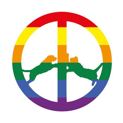 Hype Williams: Rainbow Edition