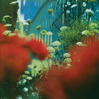 Pulled Apart By Horses: The Haze CD