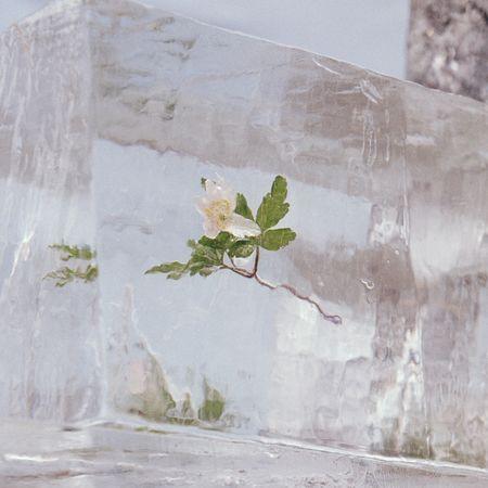 Efterklang: Windflowers: CD
