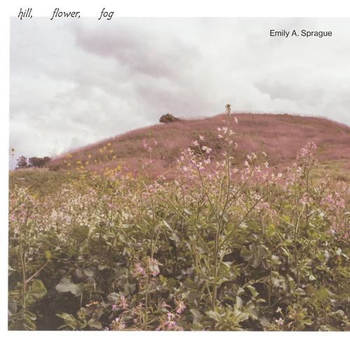 Emily A. Sprague: Hill, Flower, Fog
