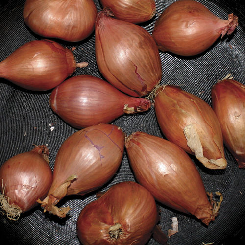 Ty Segall: Fried Shallots