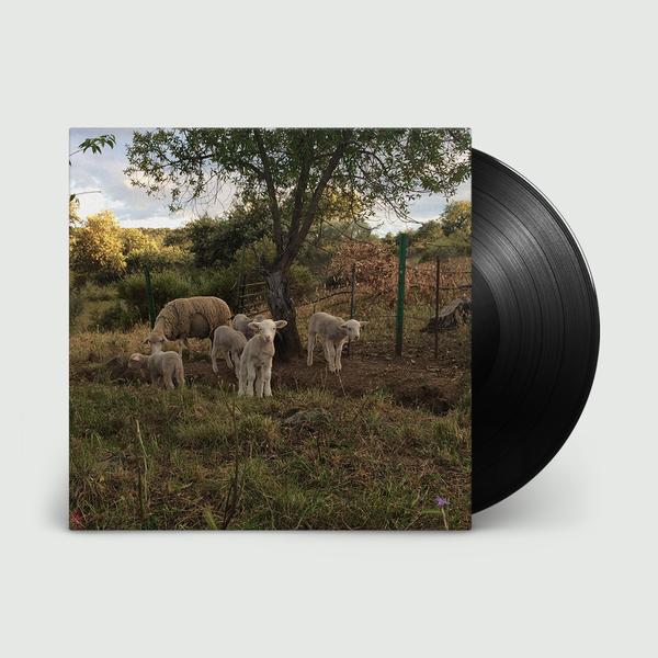Josephine Foster: No Harm Done: Black Vinyl