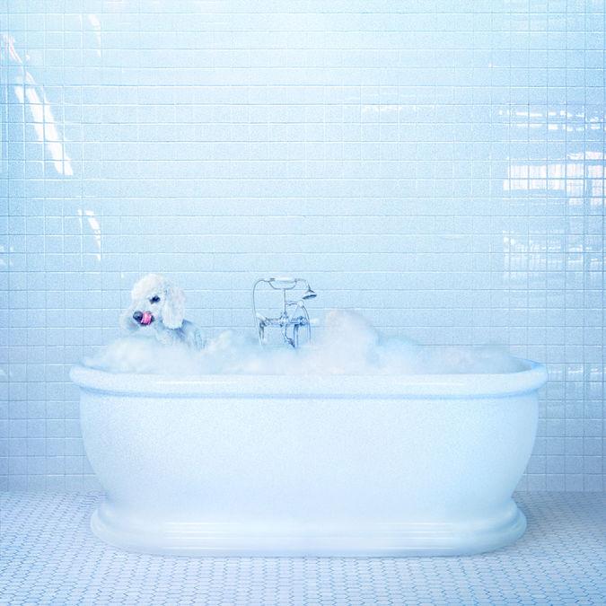 Frankie Cosmos: Vessel: Translucent Blue Vinyl